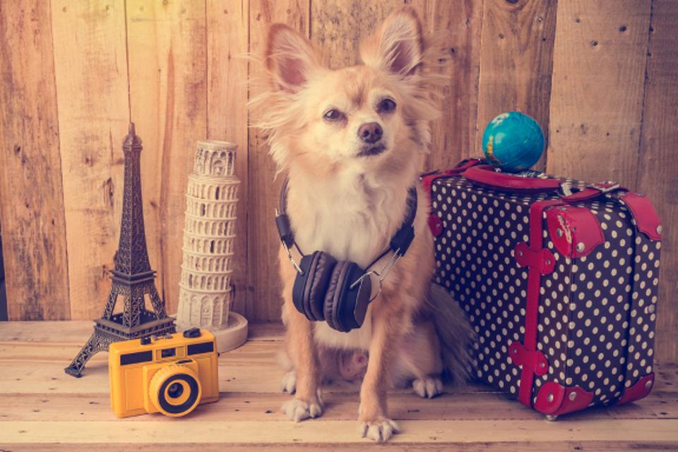 dog friendly UK holidays